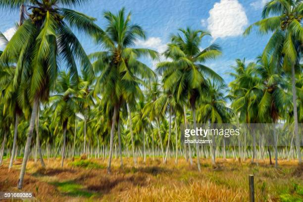 coconut farm in perak - shaifulzamri stock pictures, royalty-free photos & images