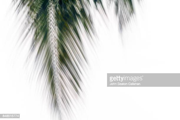 Coconut Frond on Anjouan Island