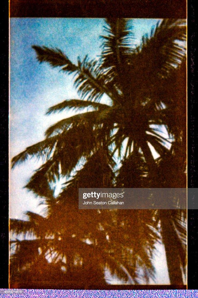 Coconut Grove : Stock Photo
