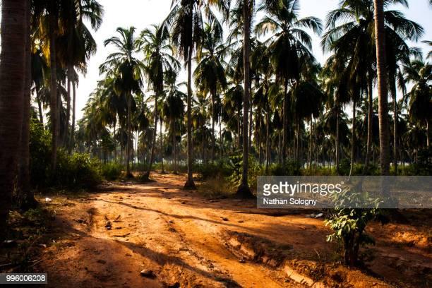 coconut grove - côte d'ivoire stock-fotos und bilder