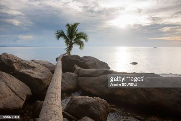 Coconut growing at the horizon and sunset, Pulau Perhentian, Malaysia