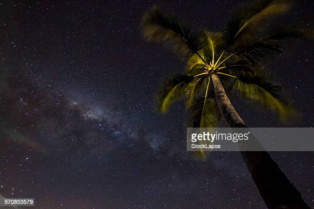 Coconut in Milk Way