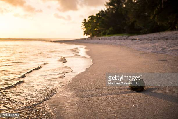 Coconut on a tropical beach at sunset, Rarotonga Island, Cook Islands, South Pacific, Pacific