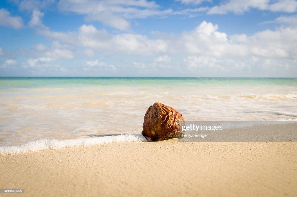 Coconut On Hodges Bay Beach Antigua Caribbean Stock Photo