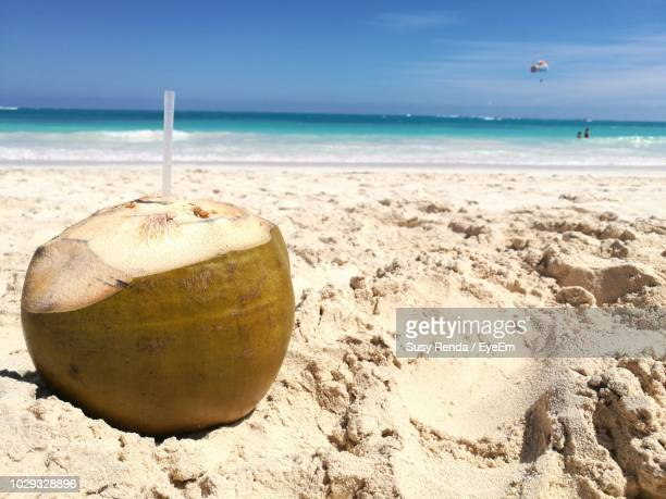 coconut on sand at beach against sky - punta cana fotografías e imágenes de stock