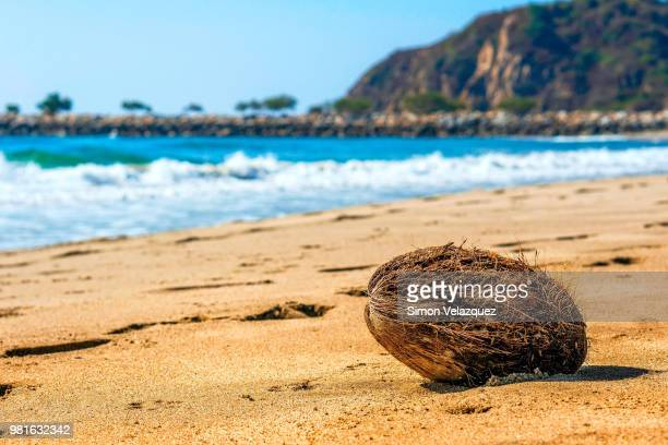 coconut on sandy beach, lagunas de chacahua national park, oaxaca, mexico - national park stock pictures, royalty-free photos & images