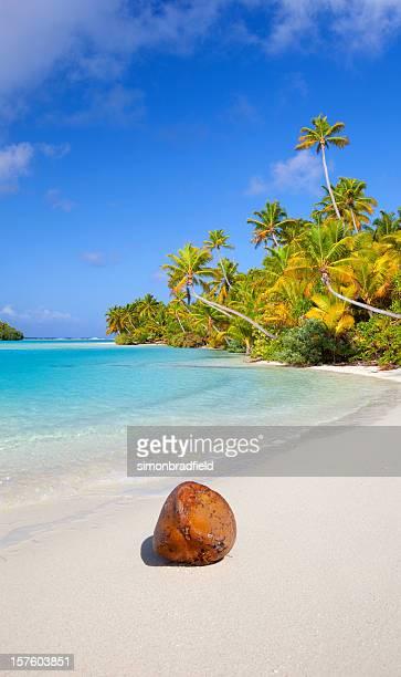 cocco sulla spiaggia del sud pacifico - isole cook foto e immagini stock