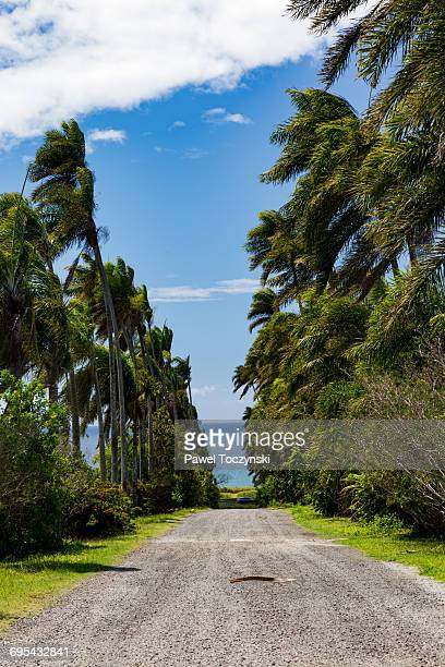 Coconut palm alley on a plantation