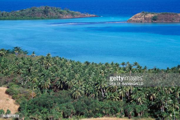 Coconut palm grove with islets in the background Naviti Island north coast Yasawa Archipelago Fiji