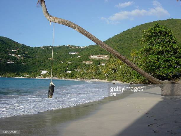 coconut palm tree and tire-swing - cane garden bay stock pictures, royalty-free photos & images