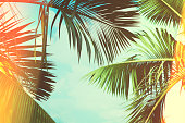 https://www.istockphoto.com/photo/coconut-palm-tree-under-blue-sky-vintage-background-travel-card-vintage-effect-gm858987092-141866567
