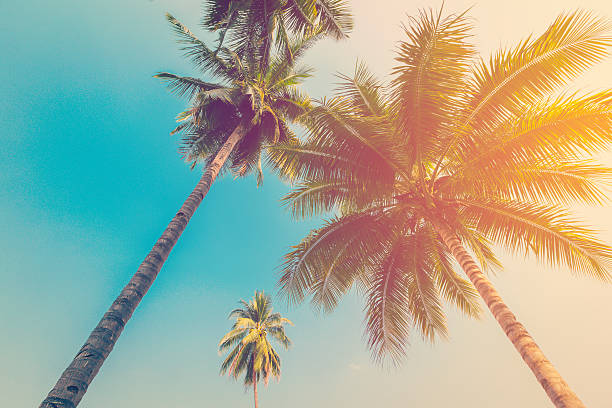 Free palm trees images pictures and royalty free stock photos coconut palm tree with vintage effect voltagebd Images