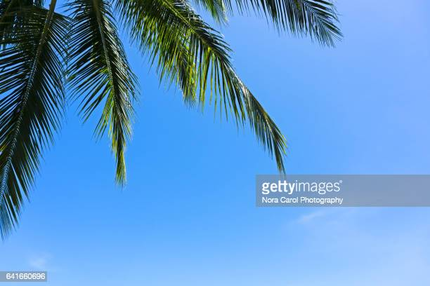 Coconut palm trees against blue sky for backgound