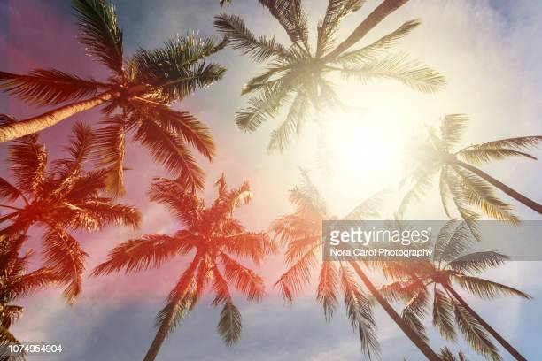 coconut palm trees against sun - kota kinabalu stock pictures, royalty-free photos & images