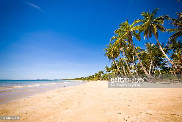 Coconut Palm Trees At Beach Against Sky