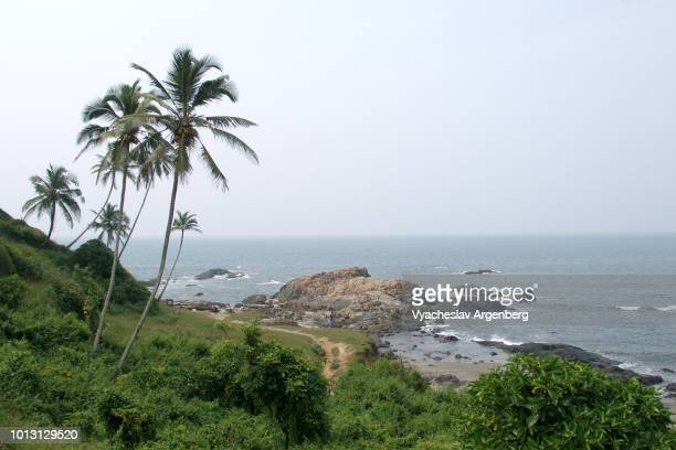 coconut palm trees at vagator beach, legendary hippie ground, goa, india - argenberg imagens e fotografias de stock