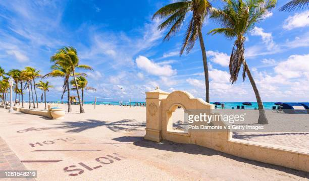 coconut palm trees at world famous hollywood beach close to miami beach, florida - hollywood florida stock pictures, royalty-free photos & images