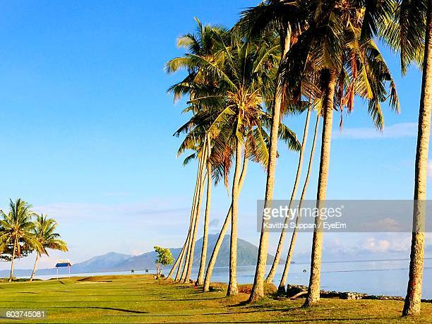Coconut Palm Trees By Sea Against Sky