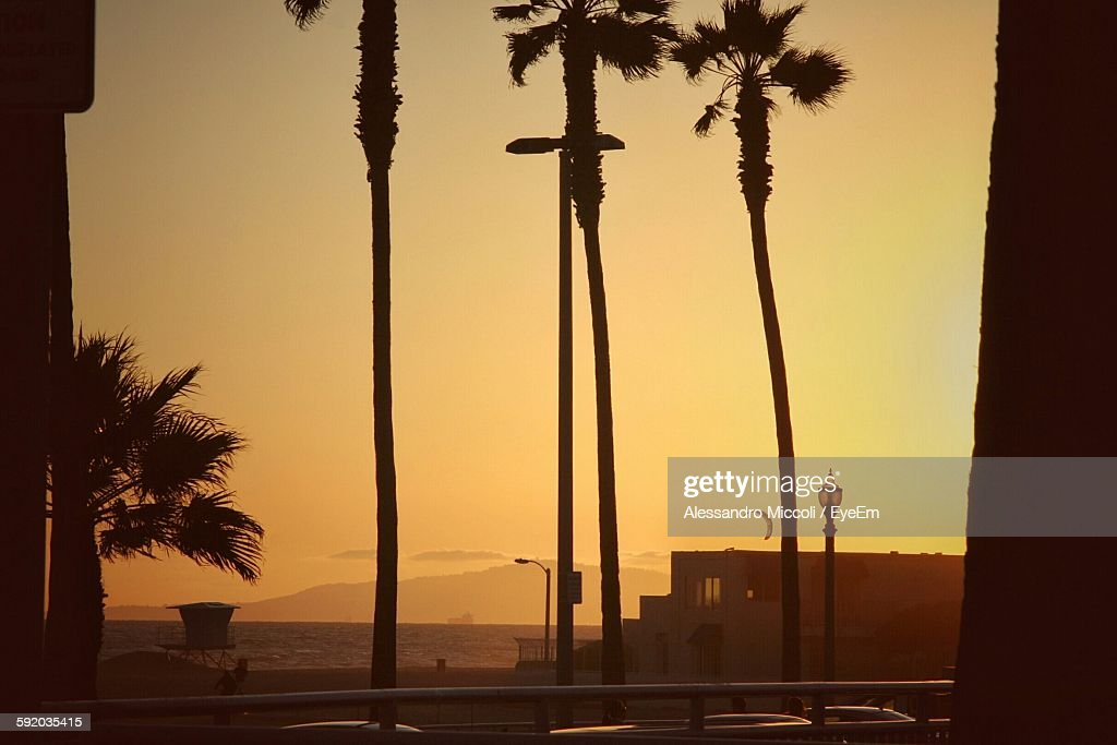 Coconut Palm Trees On Field Against Clear Sky During Sunset : Stock Photo