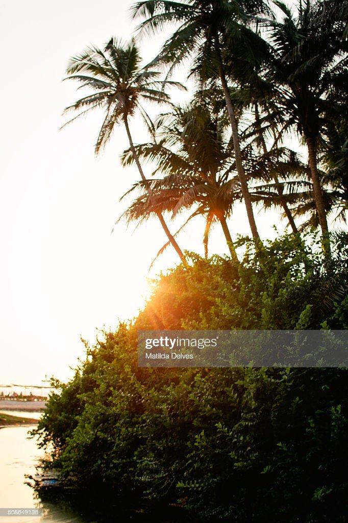 Coconut palm trees on Palolem beach, Goa, India : Stock Photo