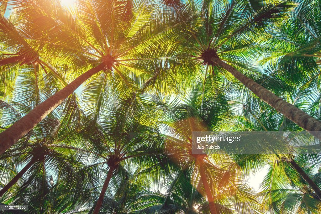 Coconut palm trees on the beach ,summer concept background, travel concept : Stock-Foto