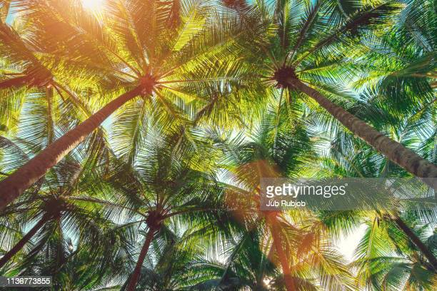 coconut palm trees on the beach ,summer concept background, travel concept - kalifornien stock-fotos und bilder