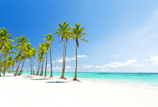 Coconut Palm trees on white sandy beach in Punta Cana, Dominican Republic 1041914220