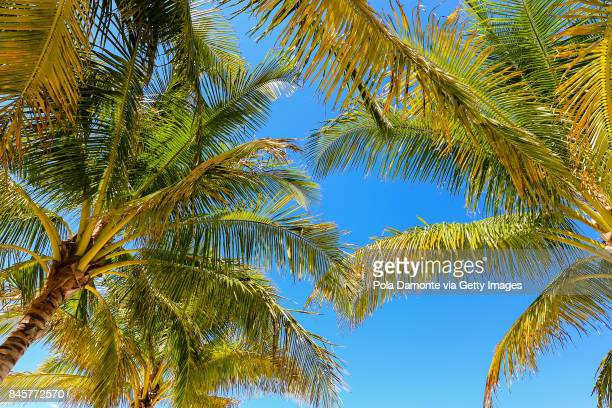 Coconut Palm trees with blue sky at summer