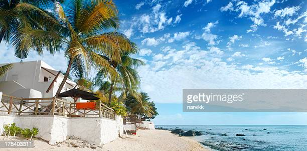 Coconut palms and beach at Mauritius