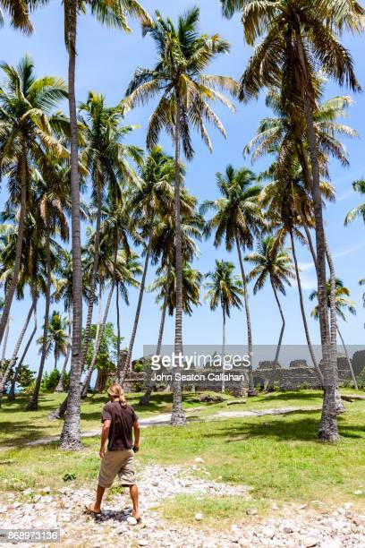 Coconut Palms and the Caribbean Sea