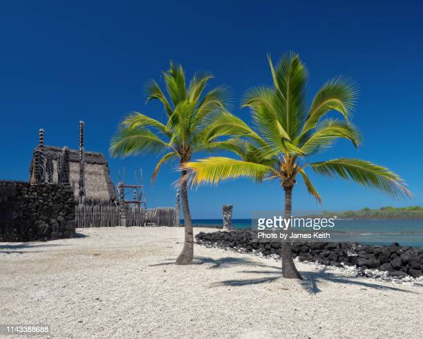 coconut palms and tikis frame the sandy walkway leading to the hale o keawe temple on the sanctuary grounds. - kailua stock pictures, royalty-free photos & images