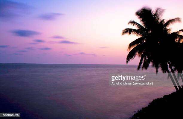 Coconut palms by the seaside