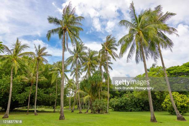 coconut palms, darwin, australia - darwin australia stock pictures, royalty-free photos & images