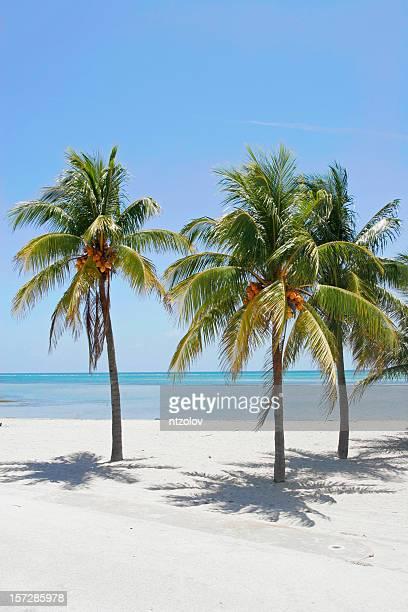 ビーチでヤシ - キービスケイン ストックフォトと画像