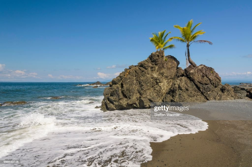 coconut palms on rocks at the beach golfo dulce puntarenas province