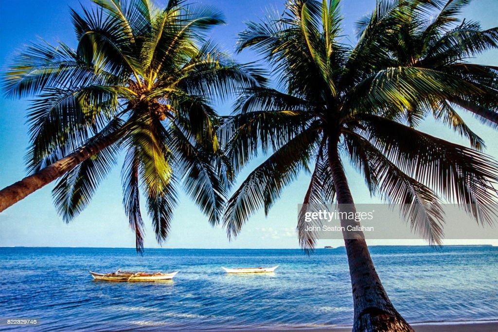 Coconut Palms on Siargao Island : Stock Photo