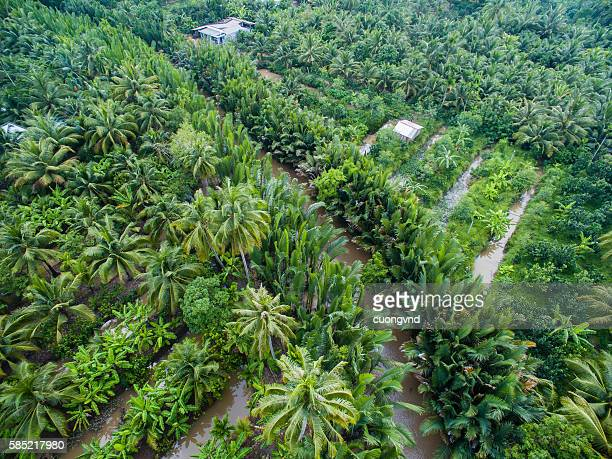 Coconut plantation in Mekong Delta from above