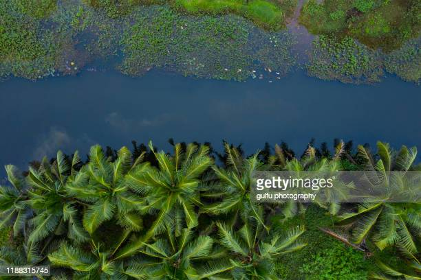 coconut tree and small pond at kerala - kochi india stock pictures, royalty-free photos & images