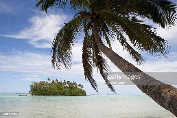 coconut tree and taakoka motu in muri lagoon. - rarotonga foto e immagini stock