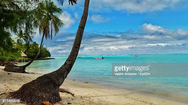 coconut tree on beach - antonov stock pictures, royalty-free photos & images