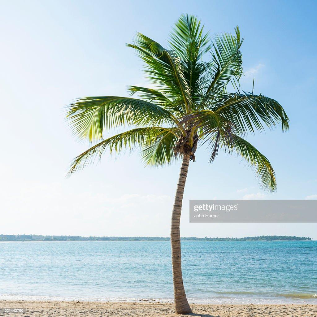Coconut Tree On Beach Sri Lanka High-Res Stock Photo ...