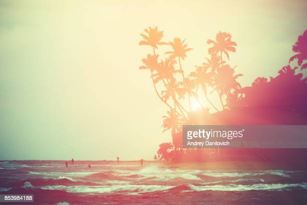 coconut trees and indian ocean - tropical climate stock photos and pictures