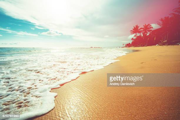 coconut trees and turquoise indian ocean - riva dell'acqua foto e immagini stock