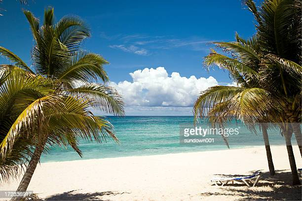 coconut trees at the greenish sea belt - mayan riviera stock photos and pictures