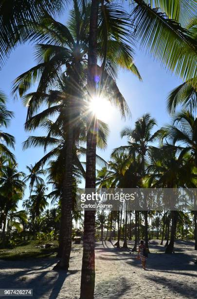 Coconut Trees in Comandatuba, Bahia