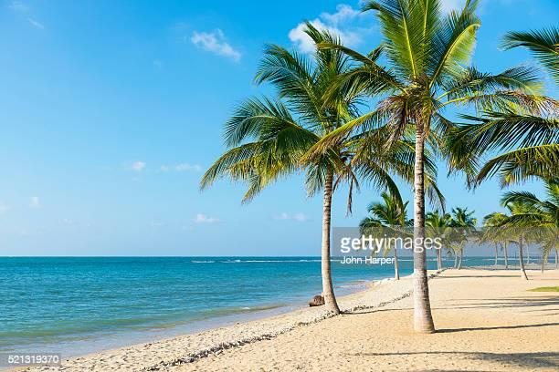 coconut trees on beach, passekudah beach, sri lanka. - cocotier photos et images de collection
