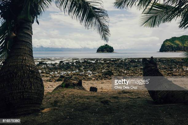 Coconut trees on foreground with islet afar