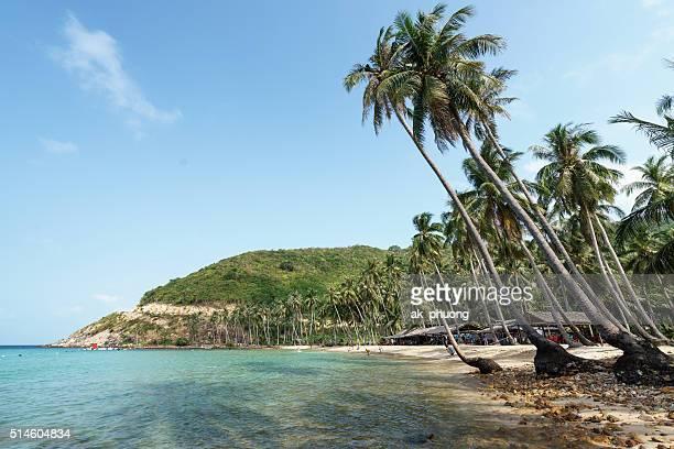 Coconut trees on the beach
