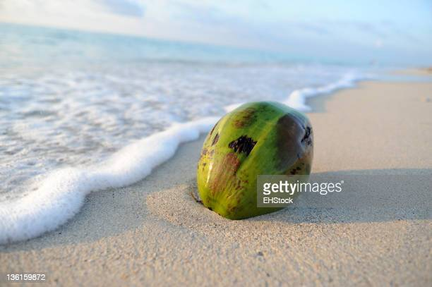 Coconut Washed Up on Beach
