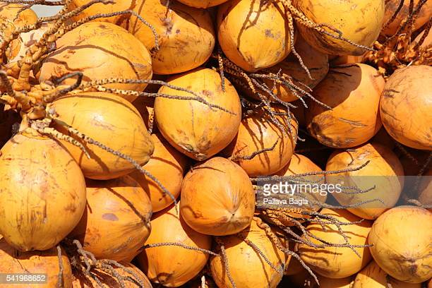Coconuts are displayed on a stall at southern Indian state of Kerala also called 'God's Own Country' the world famous beach of Kovallam This beach on...